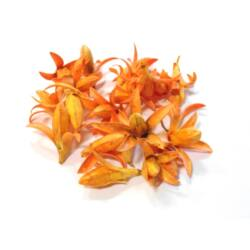 Virág termés narancs