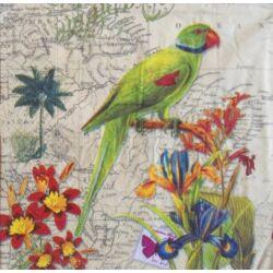 AKCIÓS - Papagáj