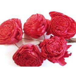 Háncs Rózsa piros