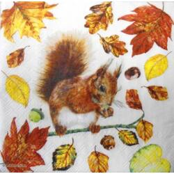 Szalvéta - Éhes mókus