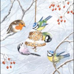 Szalvéta - Éhes madárkák