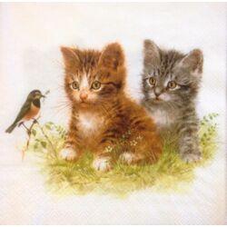 Szalvéta - Cica barátok