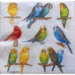 Szalvéta - Papagáj