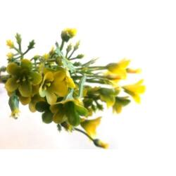 Mini apró virág csokor sárga, 14cm