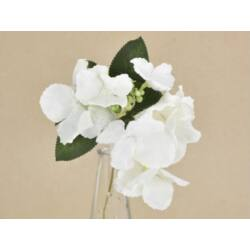 Hortenzia pick fehér