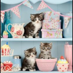 Szalvéta - Cuki cicák a konyhában