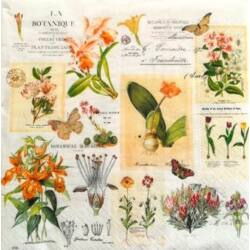 Szalvéta - virág botanika
