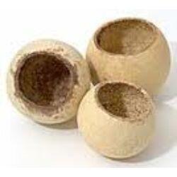 Bell cup termés