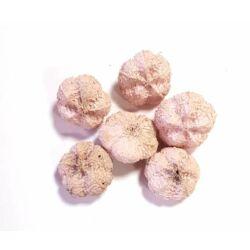 Termés mini fokhagyma rózsaszín