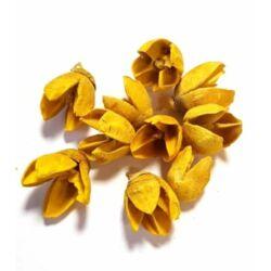 Bakuli termés, sárga