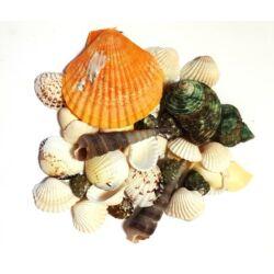 Tengeri színes kagyló és csigaház, különböző méretben