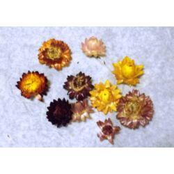 Szalma virág - vegyes