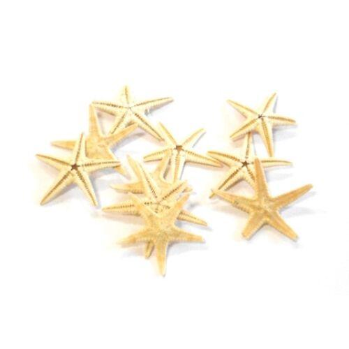 Tengeri csillag mini