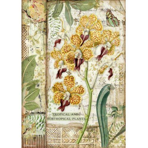 Rizspapír A4 - Amazónia orchidea